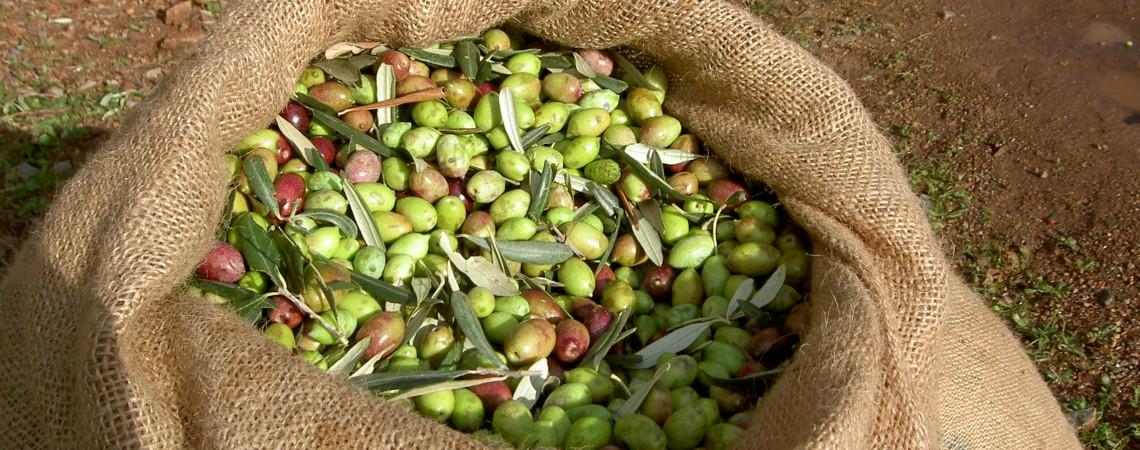 Oliven im Sack