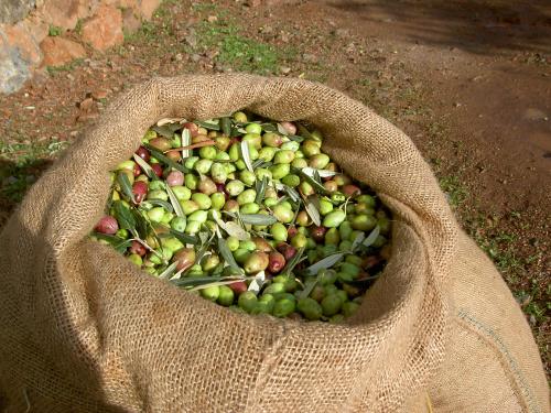 5l LAKUDIA Olivenöl Nativ Extra - Vorratsbehälter